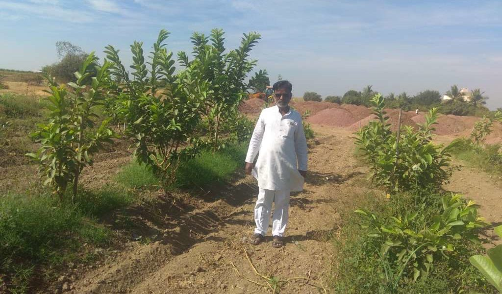 Thanks To One Man, A Drought-Prone Village Is Now Bumper Exporter Of Pomegranates. Read: